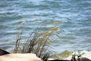 IMG_1855wind grass