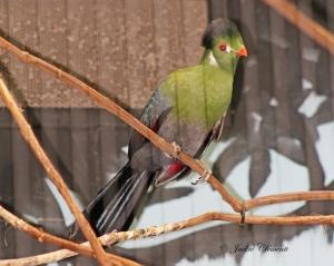 IMG_2132gr bird