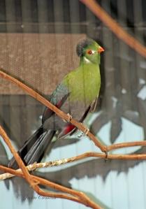 IMG_2133 gr bird