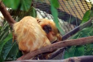 IMG_2135 monkey