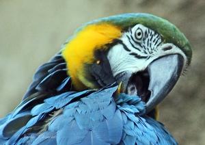 IMG_2170 b bird