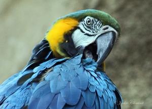 IMG_2172 blue bird