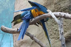 IMG_2182 macaw