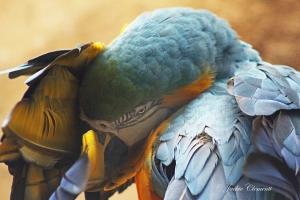 IMG_2184 macaw