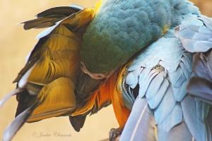 IMG_2186 macaw