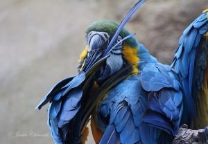 IMG_2187 macaw