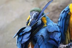 IMG_2188 macaw