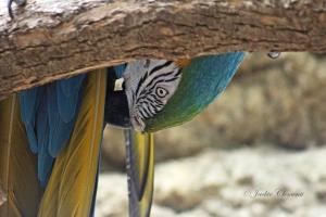 IMG_2194 macaw