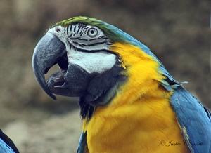 IMG_2197 macaw