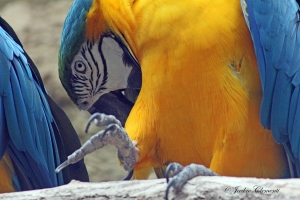 IMG_2200 macaw