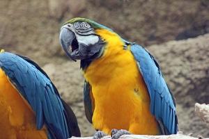 IMG_2202 macaw