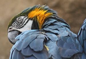 IMG_2205 macaw