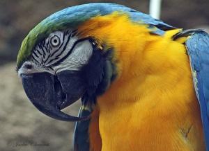 IMG_2208 macaw