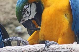 IMG_2212 macaw