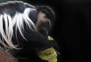 IMG_2253 monkey