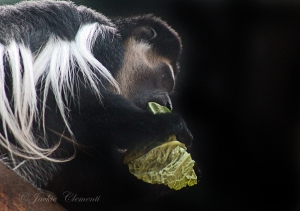 IMG_2254 monkey