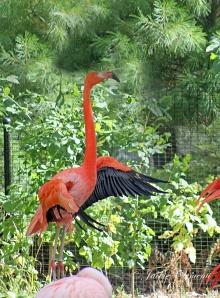 IMG_2532 flamingo