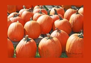 IMG_2246 pumpkins