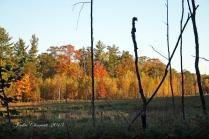 IMG_2586 beaver pond