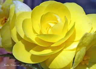 IMG_2707 yellow flower