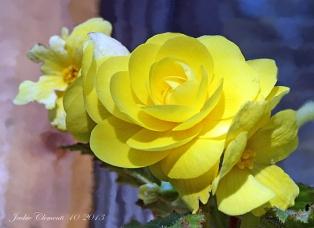 IMG_2708 yellow flower