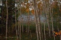 IMG_2717 morning mist