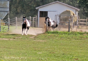 IMG_4389 s horses