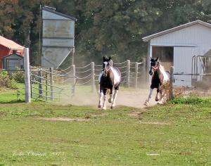 IMG_4391 s horses