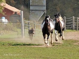 IMG_4398 horses