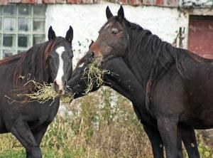 IMG_4491 s horses