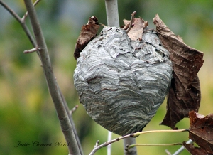 IMG_4564 very large nest