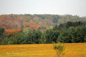 IMG_4571 fall mist