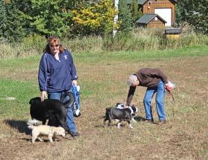 IMG_4629 dog walk