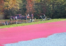IMG_4943 cranberry bog workers