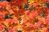 IMG_5564 s orange leaves