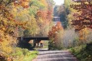 IMG_5622 s RR bridge
