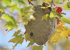 IMG_5707 stacys bee hive