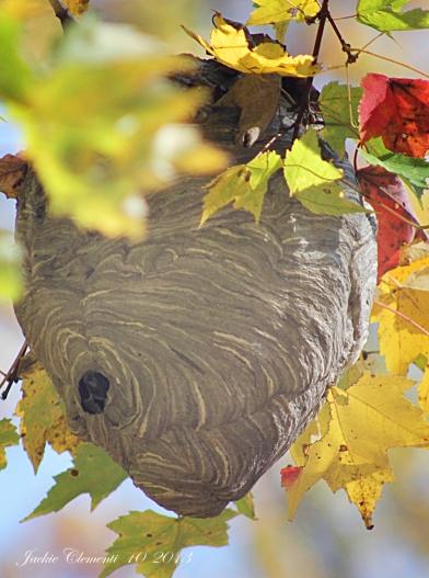 IMG_5709 stacys bee hive