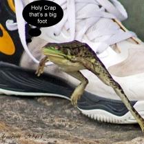 IMG_9575 frog 1