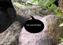 IMG_9576 frog 2