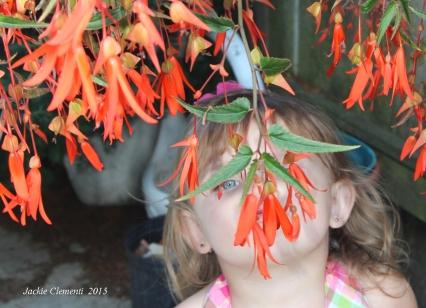 Smelling the bonfire begonia