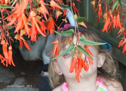 Smelling the bonfire begonia