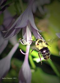 IMG_0112 bee s