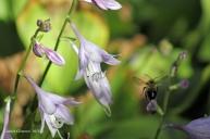 IMG_0126 flowerbee
