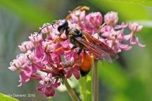 IMG_3722 wasp close