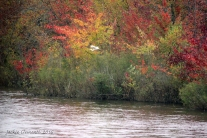 img_5313s-color-on-wi-river