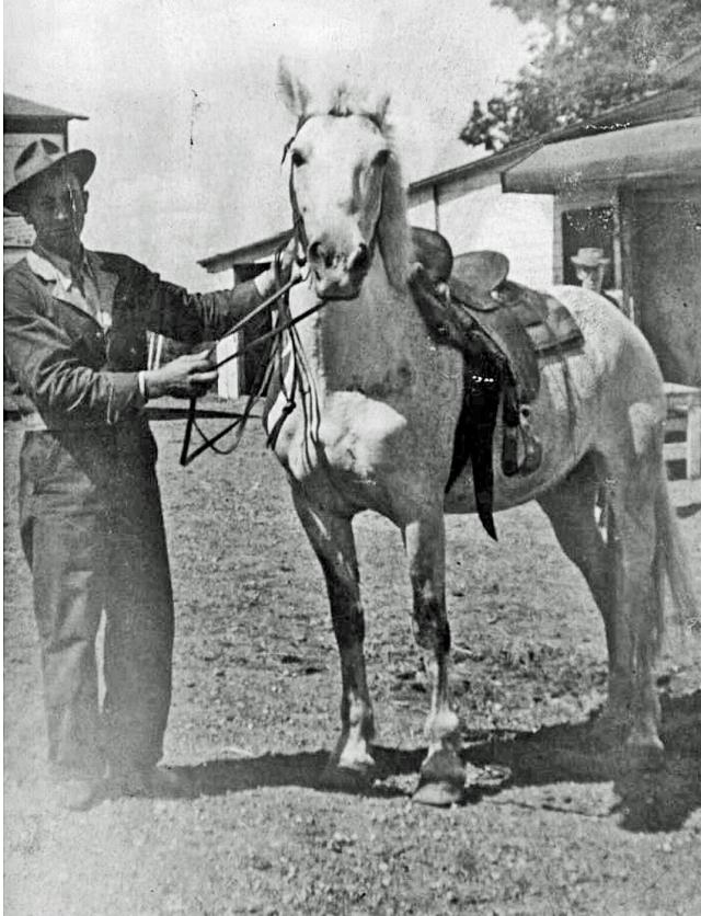 papa horse copy