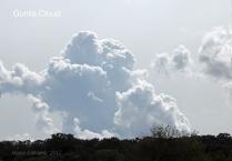 Gorilla Clouds